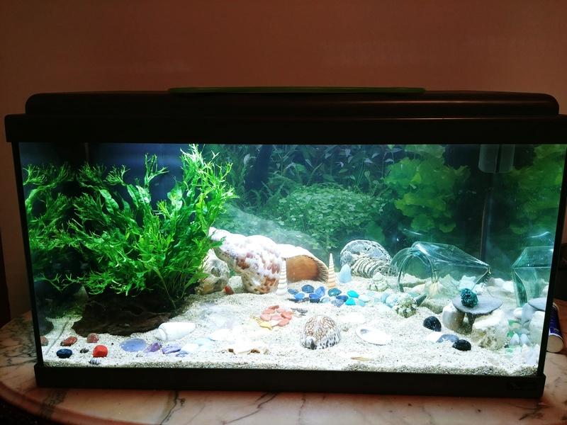 Oscar et son premier aquarium 60L - sans pensionnaire 20180412