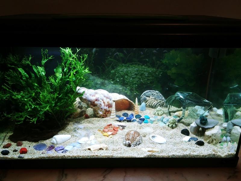 Oscar et son premier aquarium 60L - sans pensionnaire 20180413