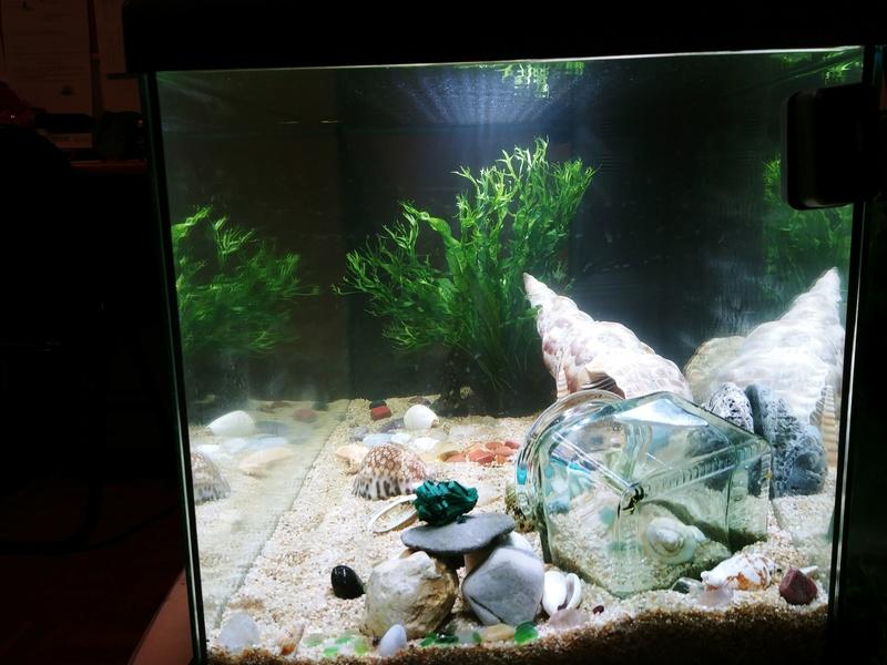 Oscar et son premier aquarium 60L - sans pensionnaire 20180414