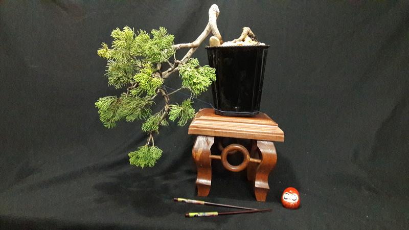 Mi primer bonsai  Img-2012