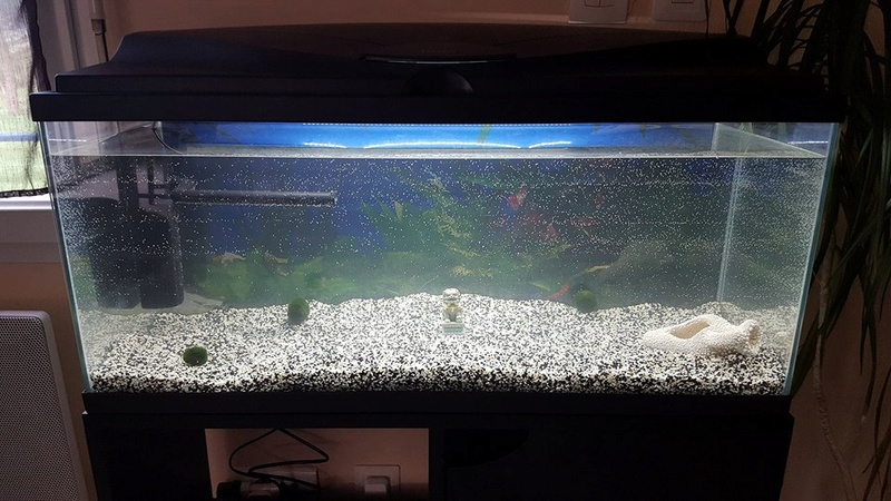 bulles fines sur parois aquarium 30697910