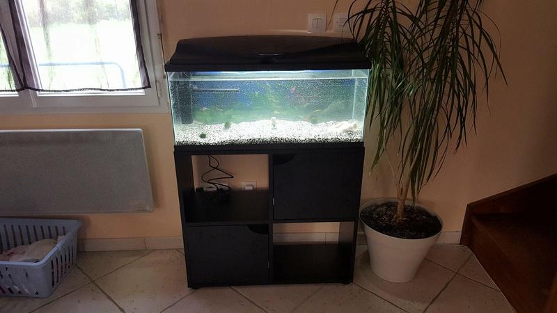 bulles fines sur parois aquarium 30708510