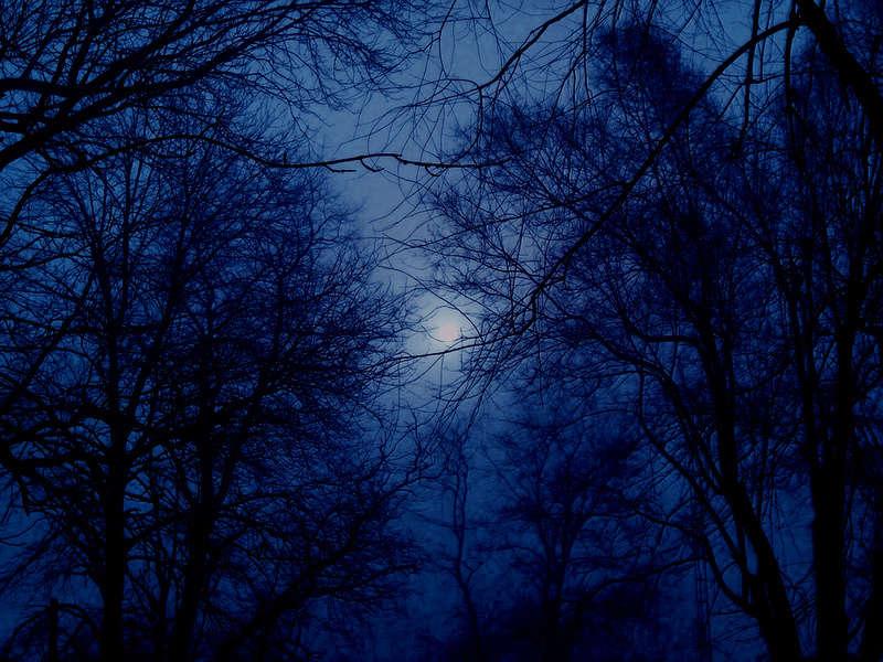 Darkwood - Portal Winter11