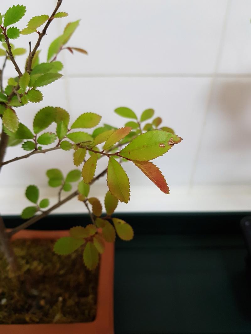 Novato en el mundo del bonsai 20180415