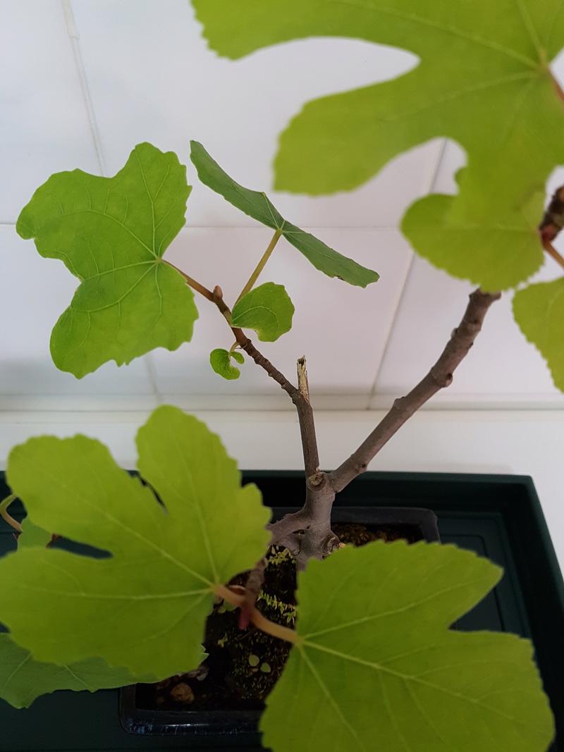 Novato en el mundo del bonsai 20180417