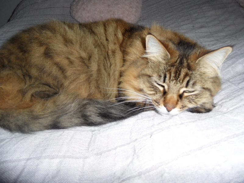 pour les amoureux des chats - Page 10 Sam_0232