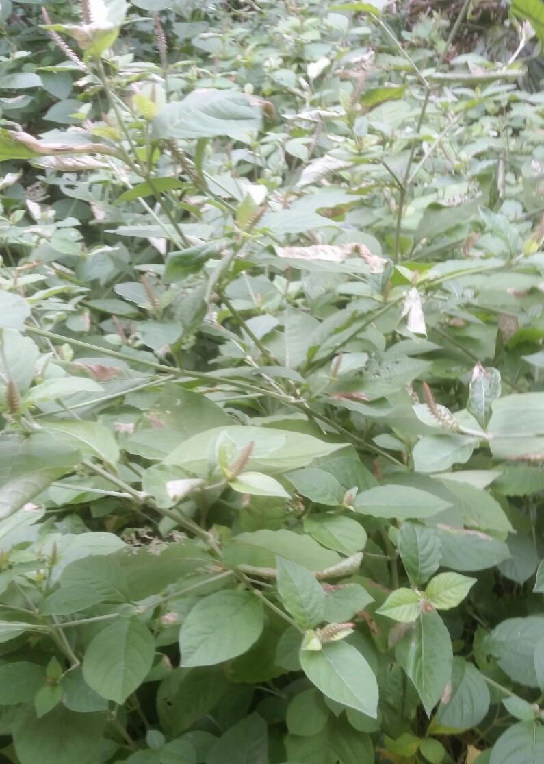 Identification plantes 2018-017