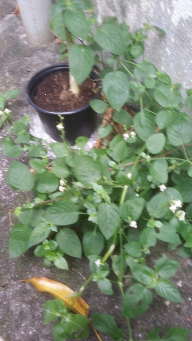 Identification plantes 2018-018