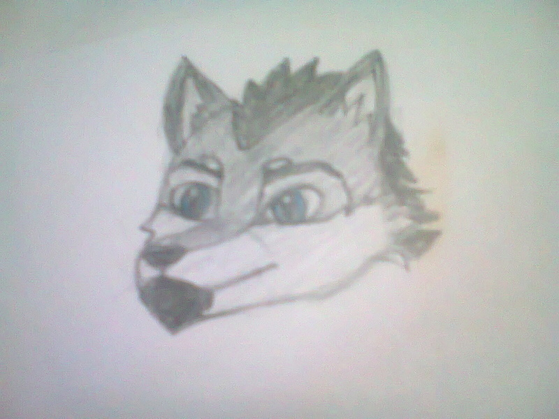 Como dibujar la cabeza de un lobo furry Foto1113