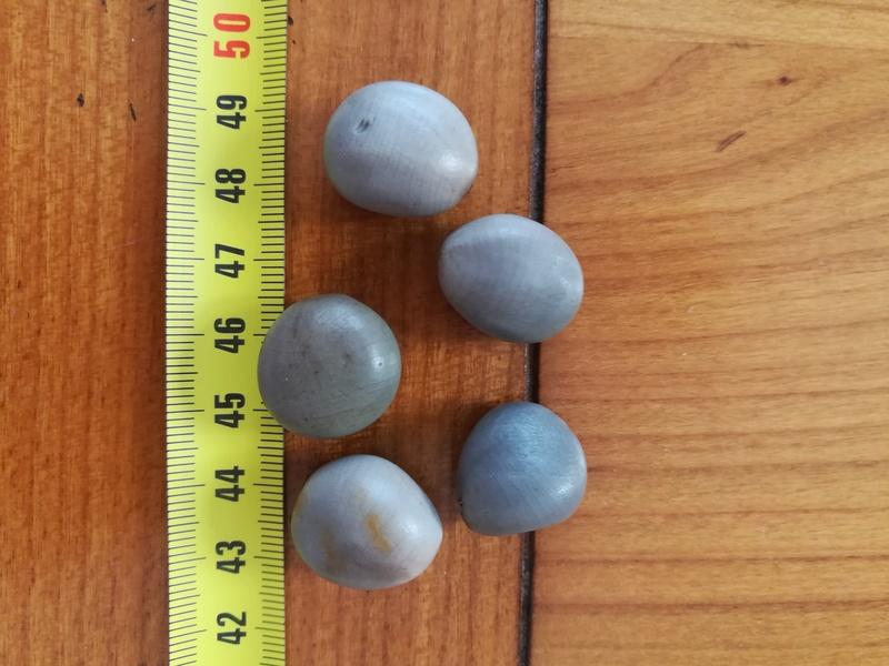 """Caesalpinia bonduc """"canique grise"""" """"graine awale"""" et Caesalpinia pulcherrima etc... Img_2012"""