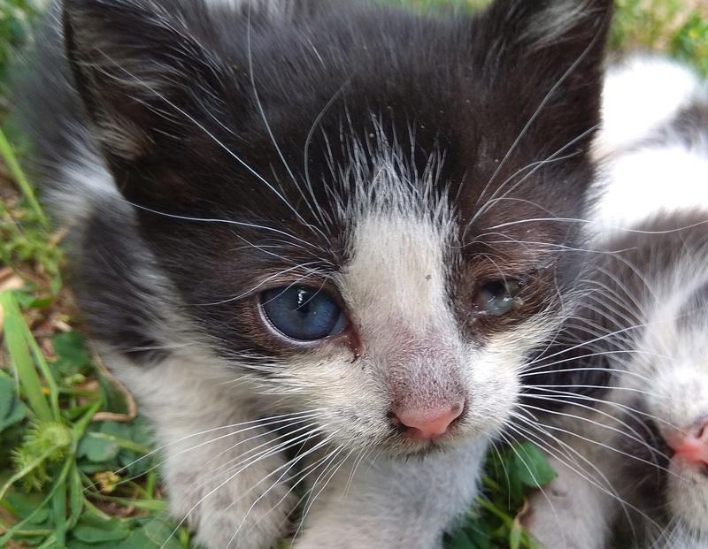 Τσιμπλα σε μικρο γατακι;; η κατι αλλο;  Img_2011