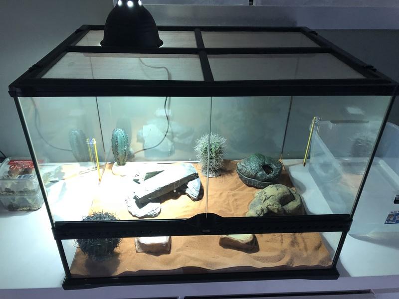 Novice Gecko Leopard ^^ Img_5310