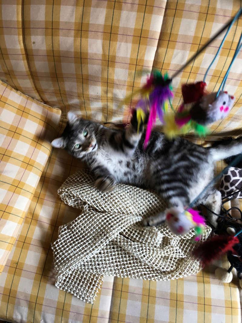 Baloo adoptado en Vitoria 002_2012