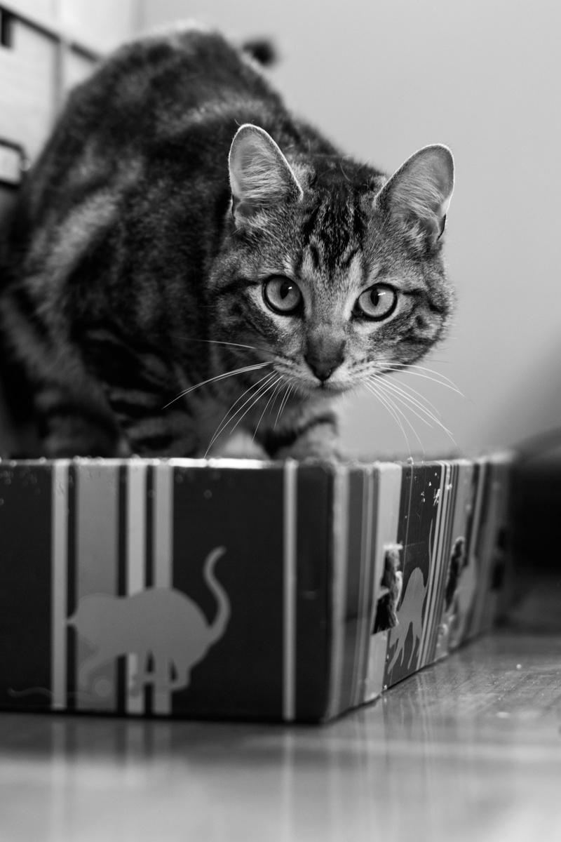 Baloo adoptado en Vitoria 005_2012