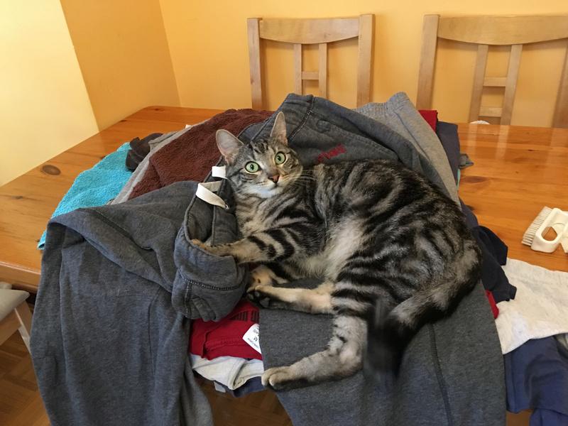 Baloo adoptado en Vitoria 012_2011