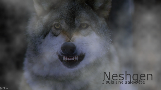 Here you are - Libre (éveil de Neshgen) 54896811