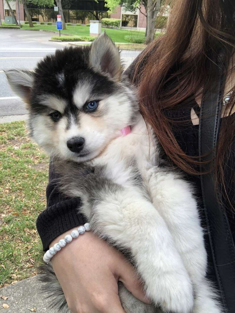 Hello and Welcome to It's A Husky Thing - Page 4 1869c310