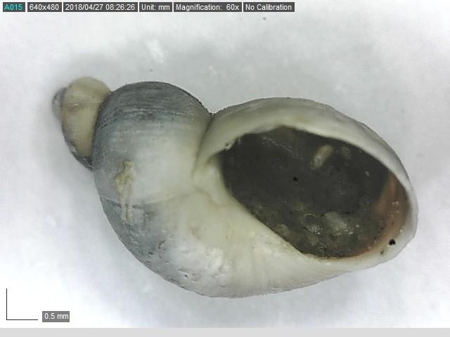 identification  Tiius211