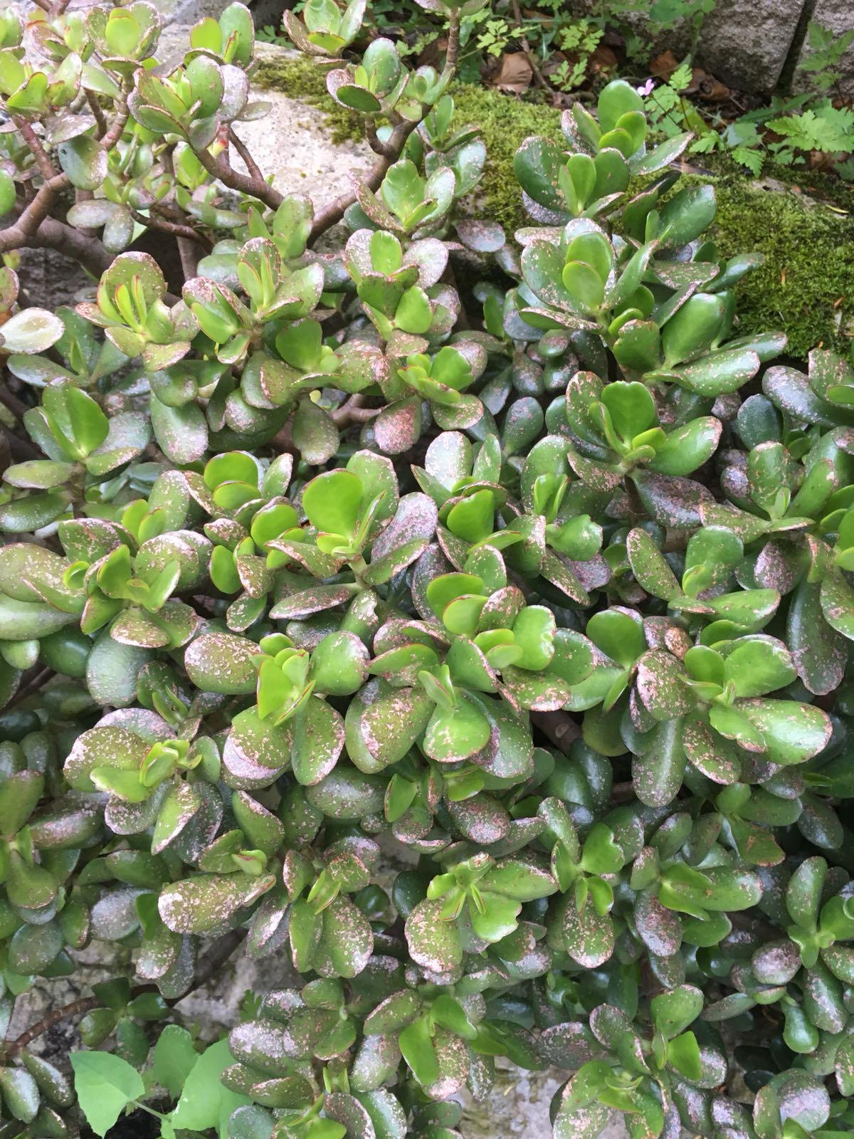¿Mi primer bonsai? Img-2017