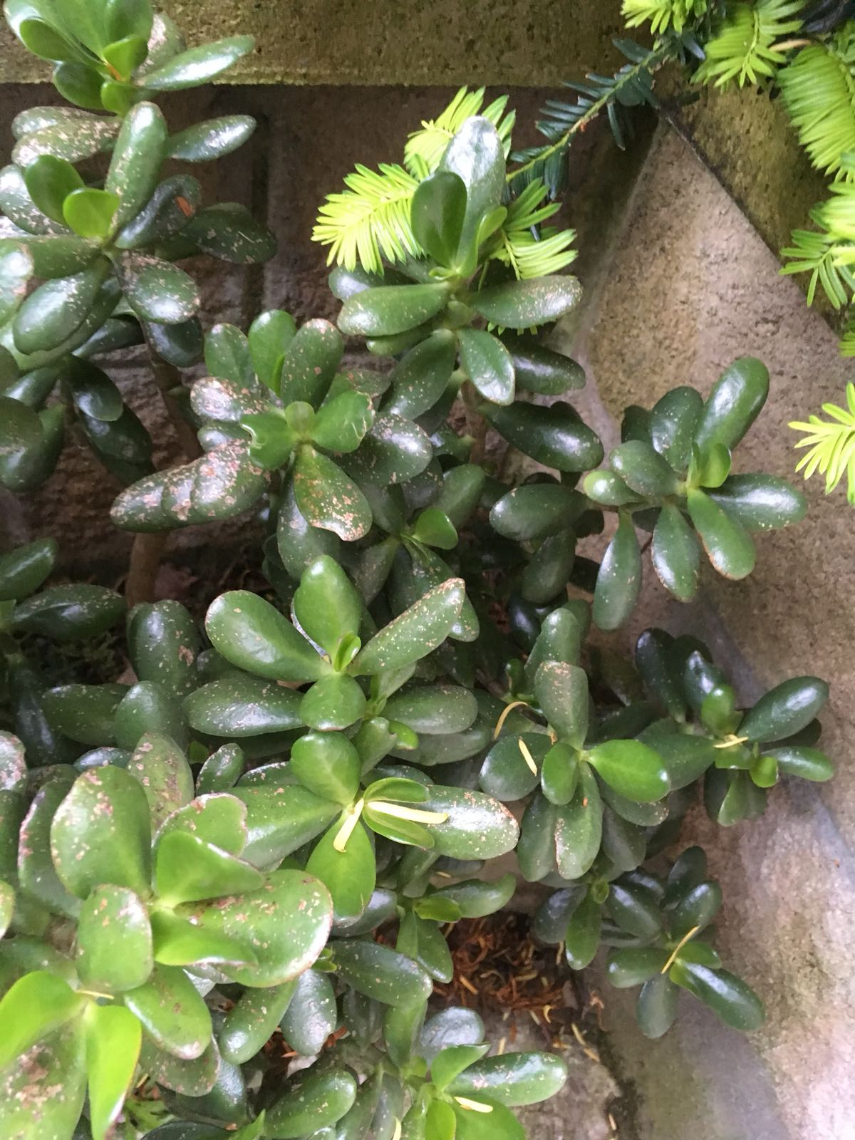 ¿Mi primer bonsai? Img-2018