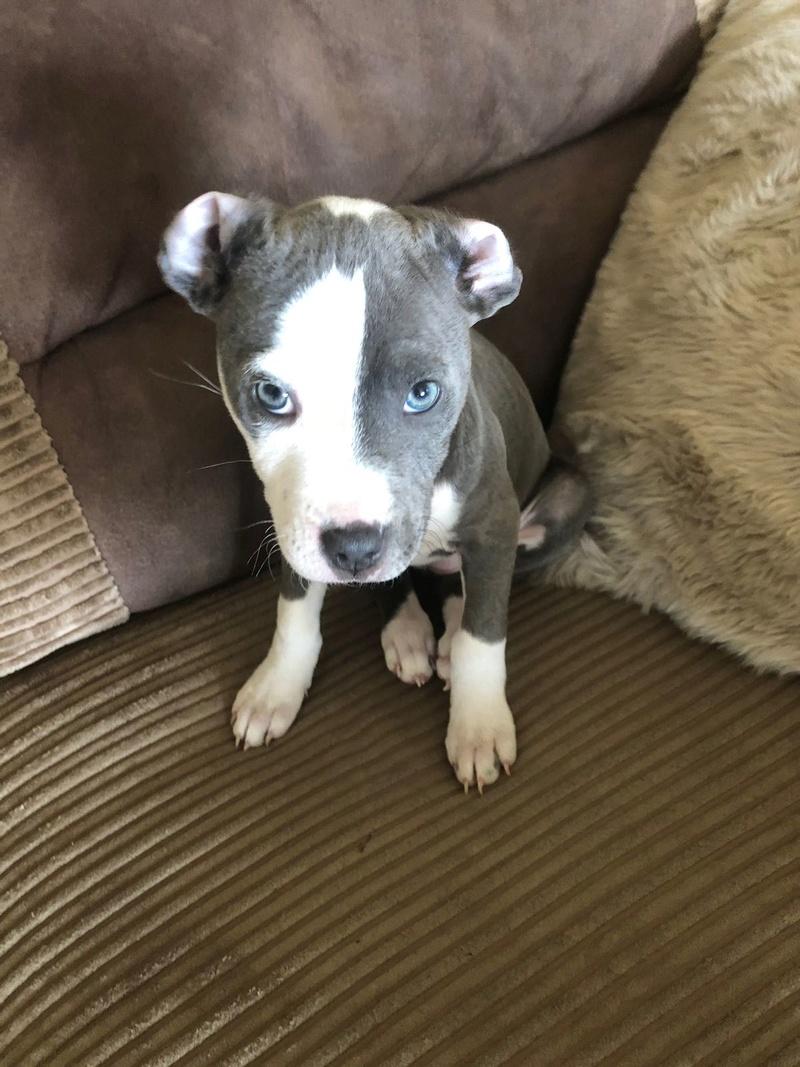Puppy pics  8f2f6410