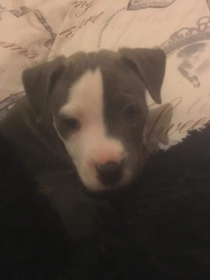 Puppy pics  97c14310