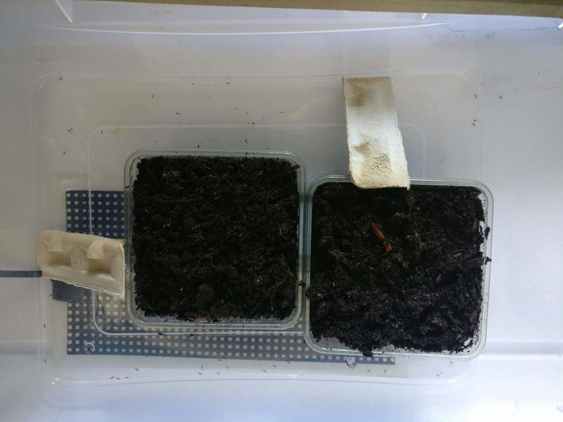 Mon petit élevage de grillons domestiques Img_2031