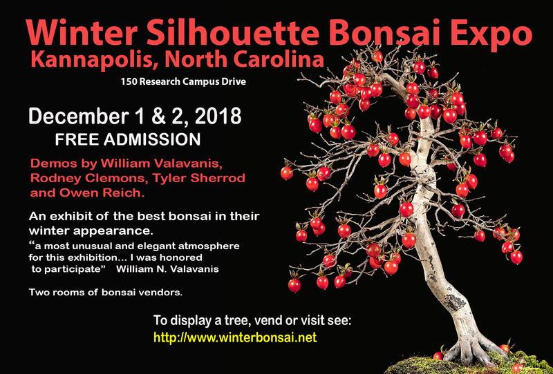 Winter SIlhouette Bonsai Show in North Carolina Winter10
