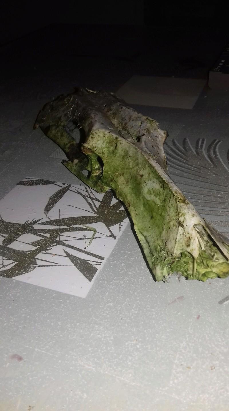 Identification de squelette 15254610