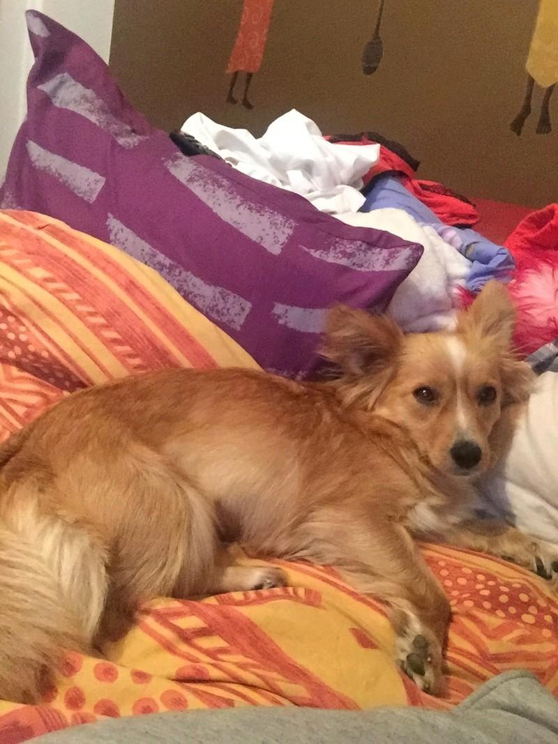 Valentina - femelle - chez Rudy (Iasi) - réservée adoption (68) 32116310