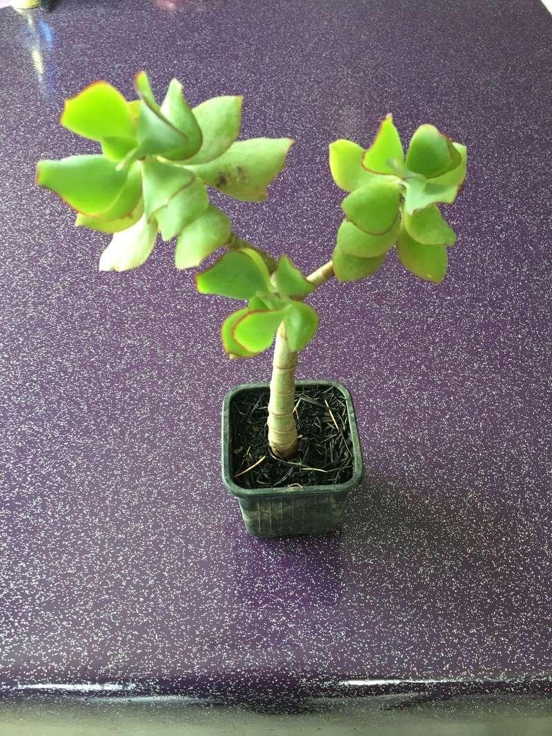 Identification pour de nouvelles succulentes Img_4816