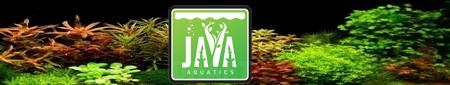 JAVA Aquatics