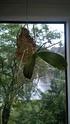Unbekannte Orchideenart sieht krank aus Wp_20111