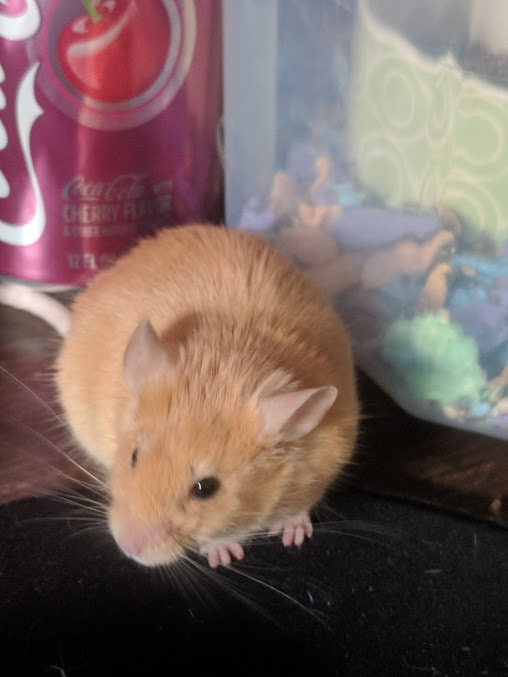 My Mouse Dossier Cutest12