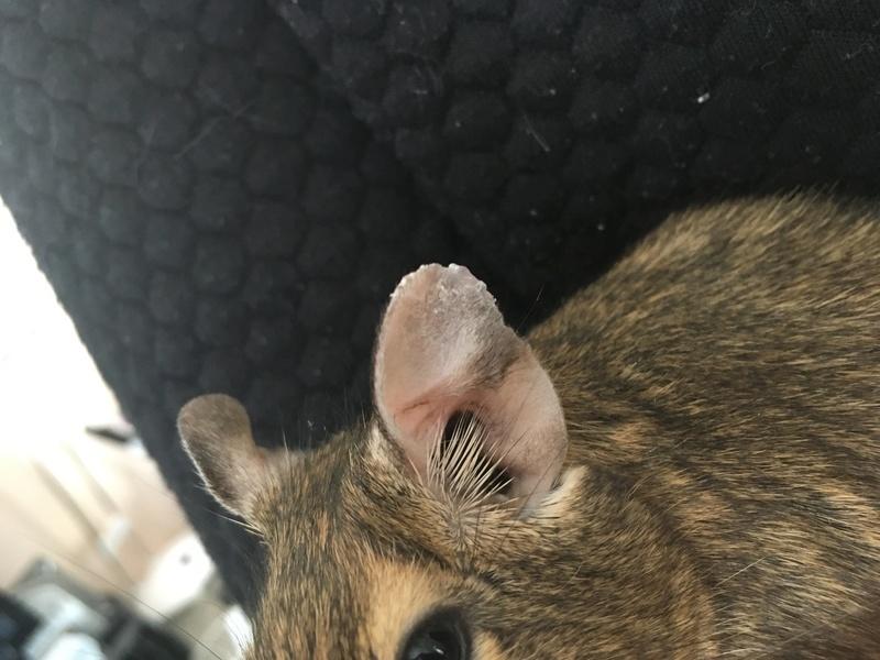 Que se passe-t-il sur son oreille ?  Photo_10