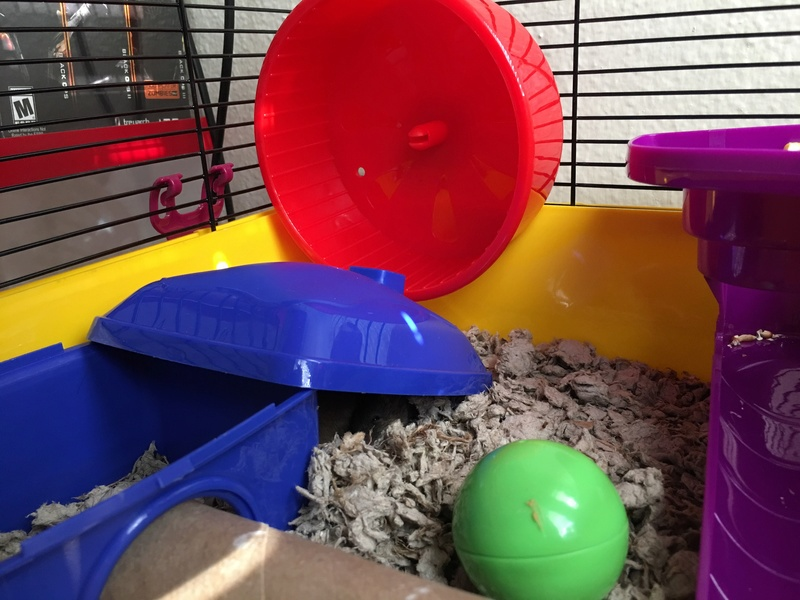 I just bought 3 female fancy mice from PetCo Image10