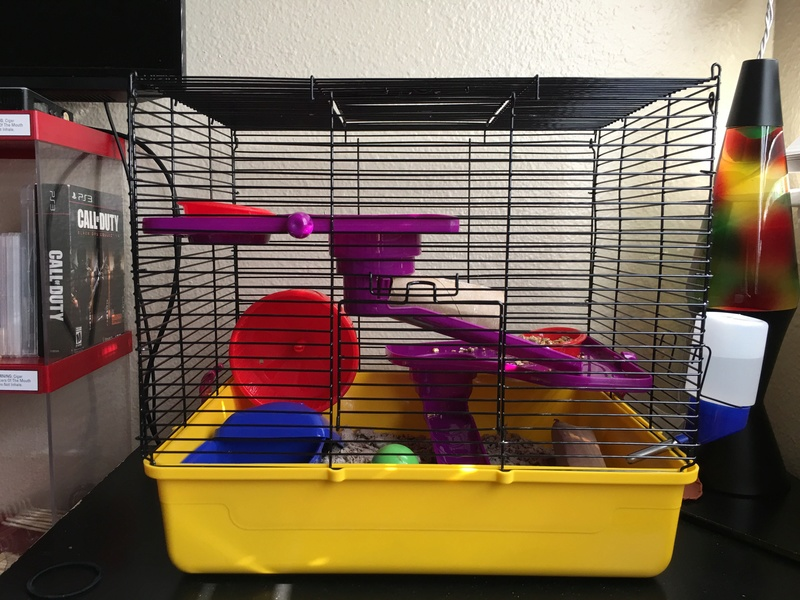 I just bought 3 female fancy mice from PetCo Image12
