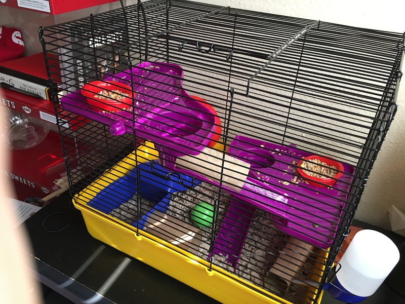 I just bought 3 female fancy mice from PetCo Image13