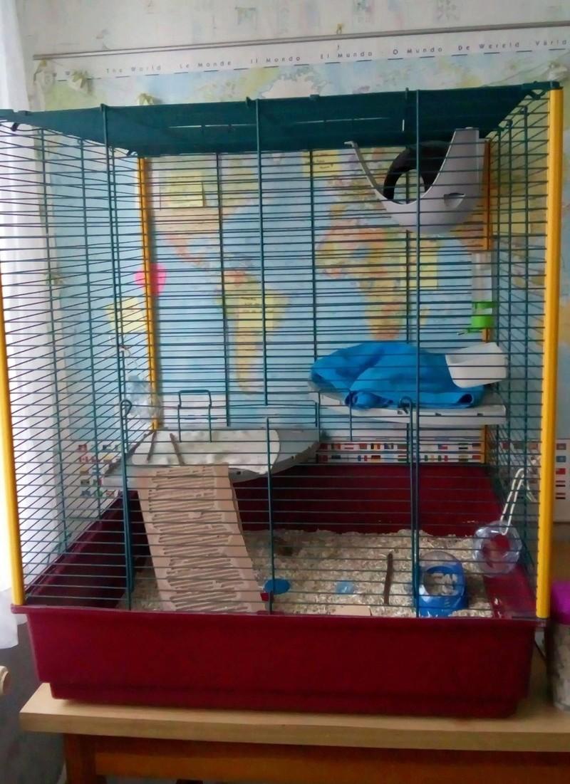 Cage trop grande ? Image12