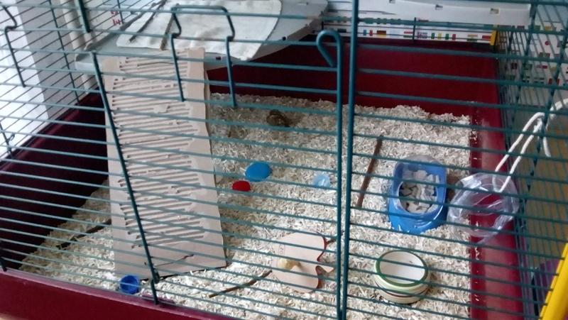 Cage trop grande ? Image13