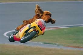 Faire de la moto avec un animal ?? - Page 2 Plop10