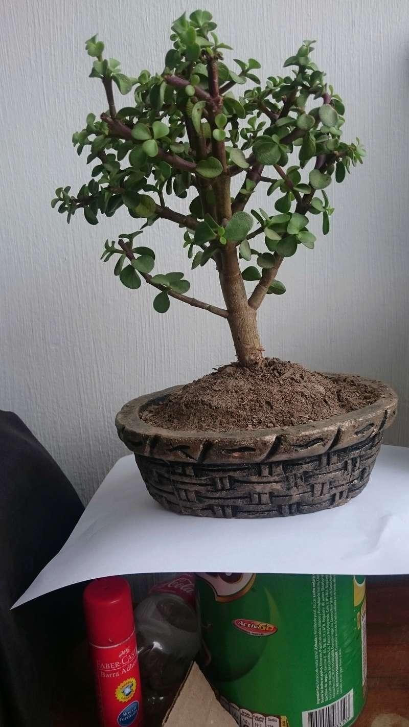 ¿Mi primer bonsai? Dsc_0914