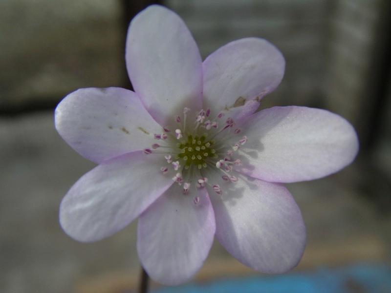 Весна идет!!! - Страница 25 Jdz4rg10