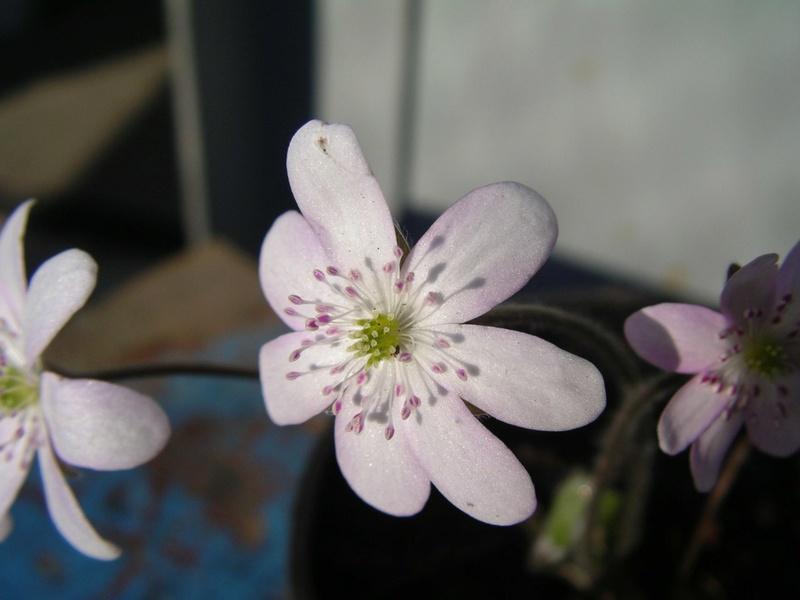 Весна идет!!! - Страница 25 Jpsbys10