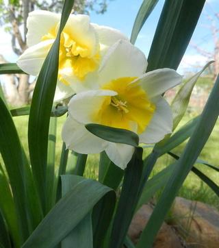 Весна идет!!! - Страница 6 Photo110