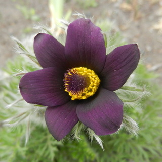 Весна идет!!! Photof89