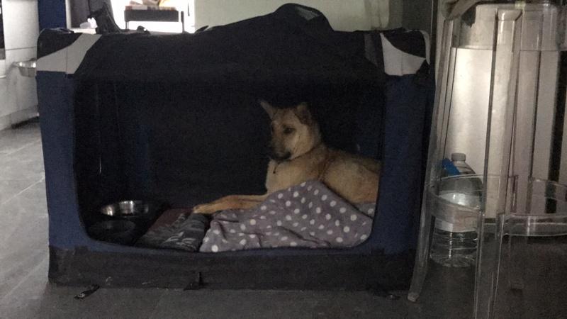 Arrivée camion chiens d'Orastie & Tamara le 12 Mai 2018 - Page 4 Img_6814