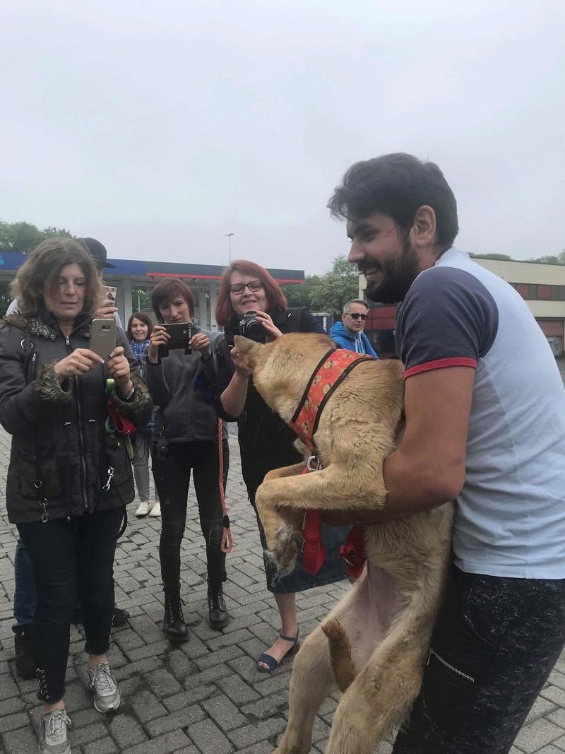Arrivée camion chiens d'Orastie & Tamara le 12 Mai 2018 - Page 4 Img_6816