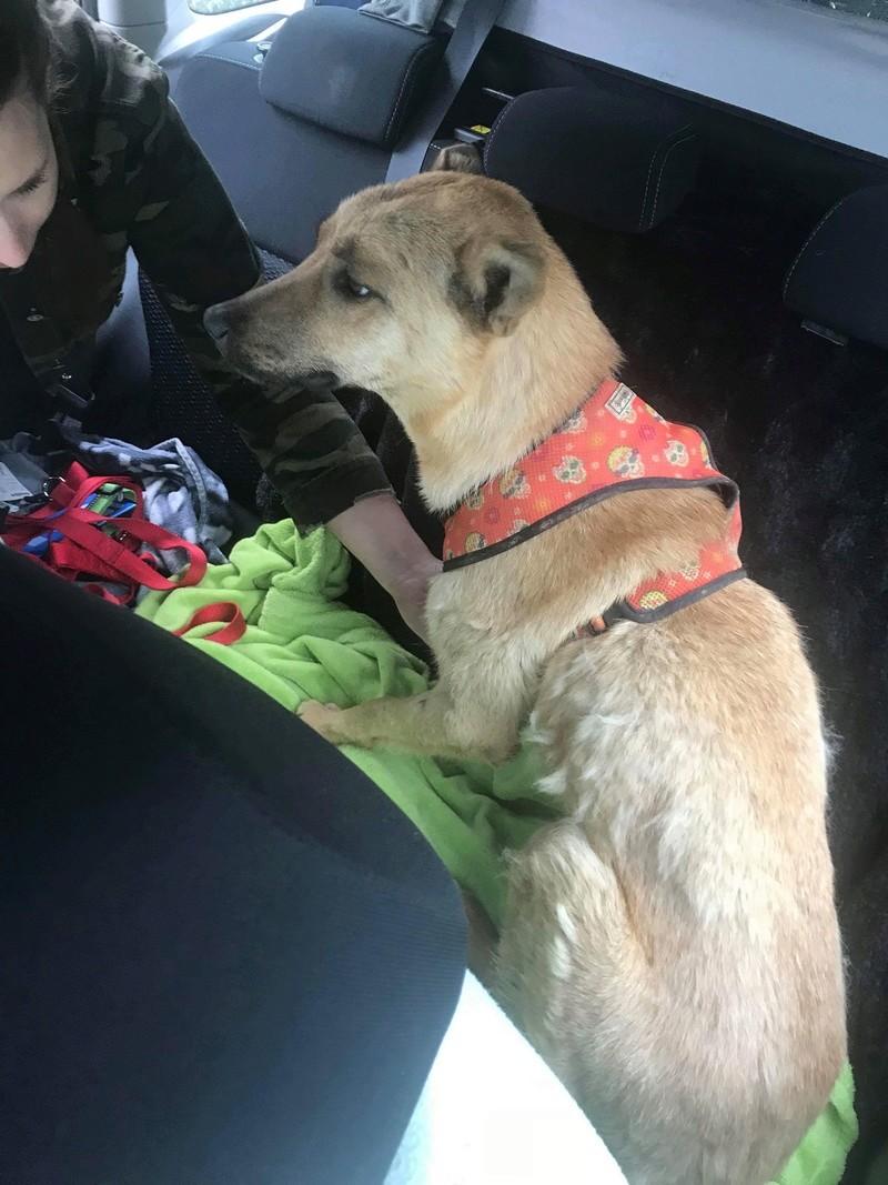 Arrivée camion chiens d'Orastie & Tamara le 12 Mai 2018 - Page 4 Img_6817