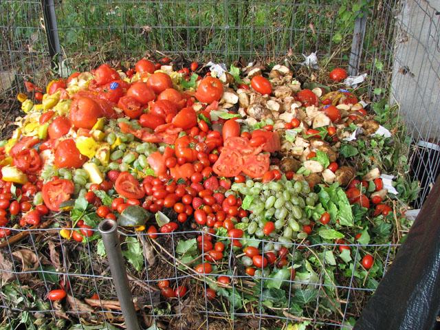 Compost pile in Schwenksville PA. 10_8_110